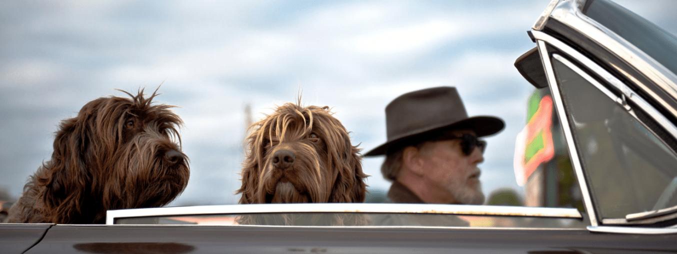 In viaggio con il cane: idee e consigli per una vacanza insieme