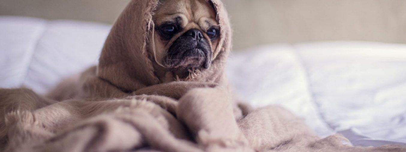 Lo stress da rientro: anche i cani soffrono della depressione post vacanze