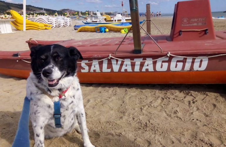 NUOVO AFFILIATO A TRIPPET! HOTEL MARINA PET-LOVERS